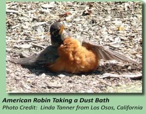 RobinBath