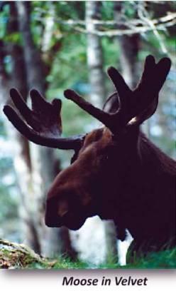 Deer2.2